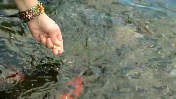 Abstraktní, plavání barevné kapra nebo Koi ryb plavání na rybník nebo jezero. A lidská ruka, která dává jim jídlo