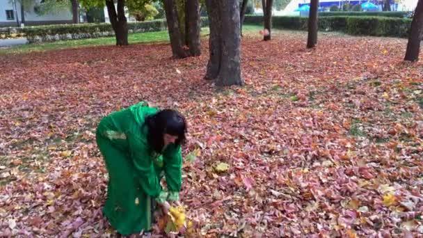 Krásná šťastná žena v zelených šatech, shromažďuje listí v podzimním parku a vrzích. Zlatá podzimní koncept. Venku.
