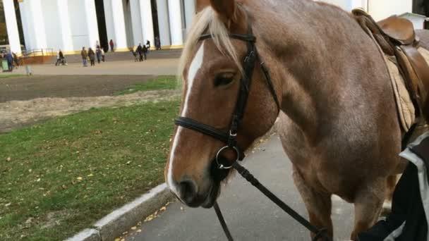 Koňské hlavy pro jízdu. Koně se očekává, že ti, kteří chtějí jezdit v parku v centru Expo v Kyjevě. Detail.