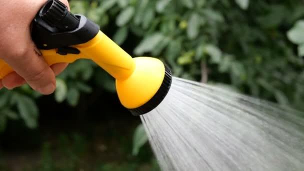 Sommer-Gartenarbeit. HandbewässerungPflanzen im Garten mit Gartenbewässerungdose oder Sprühgerät. Nahaufnahme.