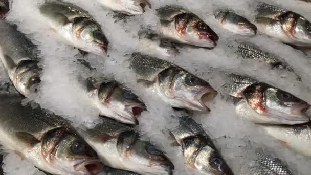 gefrorenen Fisch im Eis. Viel frischer Fisch, beladen mit Eis, im Regal im Supermarkt. Nahaufnahme.