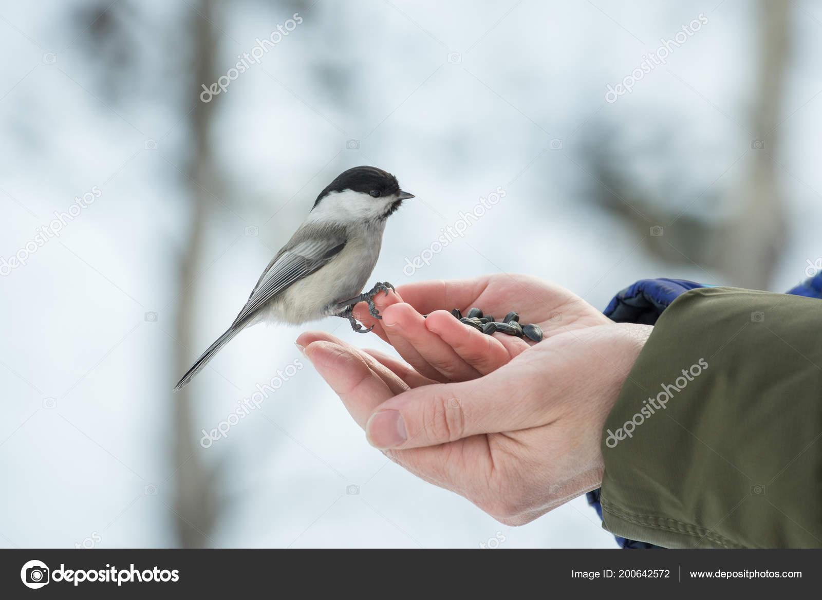 семена подсолнечника для птиц