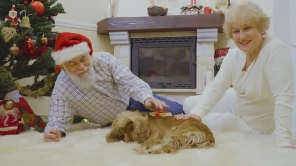 Old woman and man lie on the floor at white soft carpet and stroke a dog. Couple is very happy and like what happen. Happy senior people spend winter holiday at home together.
