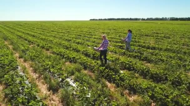 Two young girls are working at strawberry field