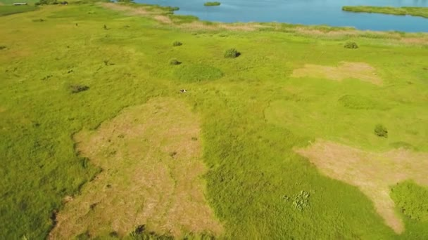 Beautiful aerial view at green meadow with a cow