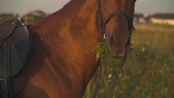 Koně žvýká trávu na hřišti