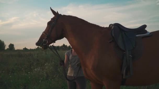 Fiatal lány tartja a lovat ellenőrzés