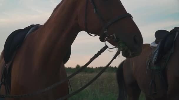 Dva koně se pasou na hřišti