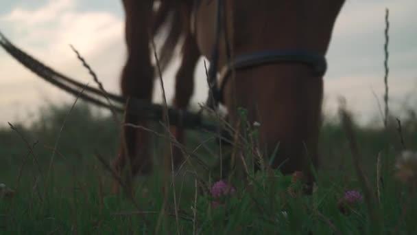 Ló legelnek a mező