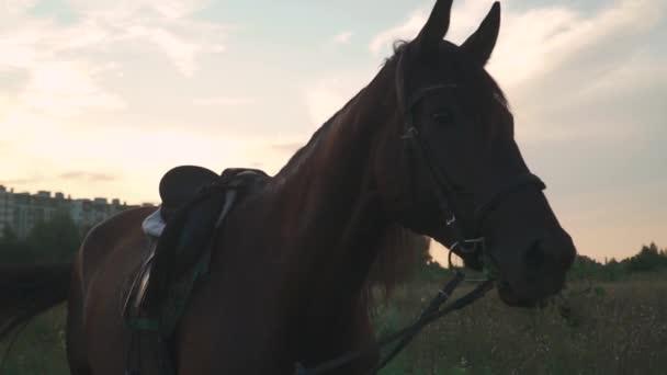 Koně žvýká trávu