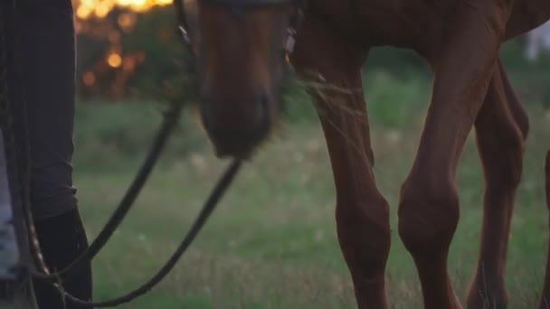 Koně se pasou na hřišti