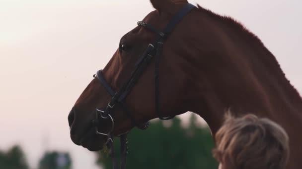 Dívka je hladil koně