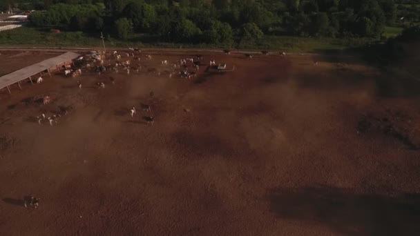 Herd of cows shooting from above
