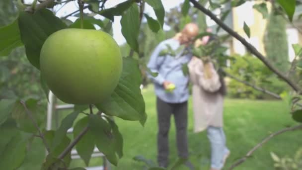 Apple on the background with a mature couple