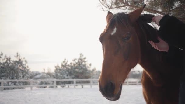 schöne Mädchen berührt die Mähne eines schönen Pferdes und streichelt ihre Schnauze auf einer Ranch im Winter. Zeitlupe.