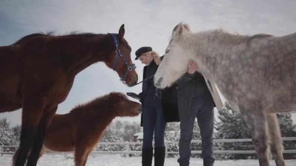 Portrét mladého páru hladil koně na ranči země v zimní sezóně. Muž a žena putování s koňmi a poníky venku. Zpomalený pohyb.