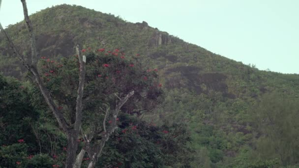Seychelles. Praslin-sziget. Pálmafák ellen a kék eget. Pálmafák a trópusi tengerparton. Zöld dzsungel, vad természet a szigeteken. Turizmus, pihenés, nyaralás, utazási koncepció