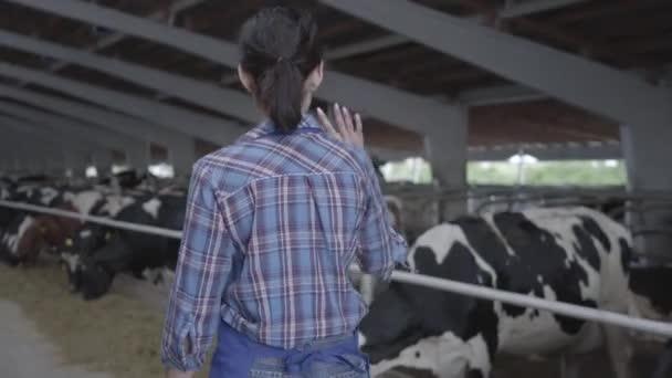 Mladá farmářka, která dělá prohlídku stodoly s kravami na farmě