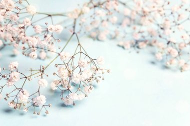 Little white flowers on blue background with space for text.