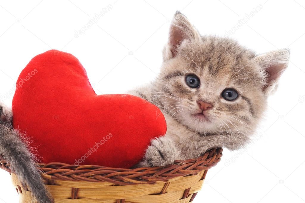 Kitten in a basket  with the heart isolated on a white background.