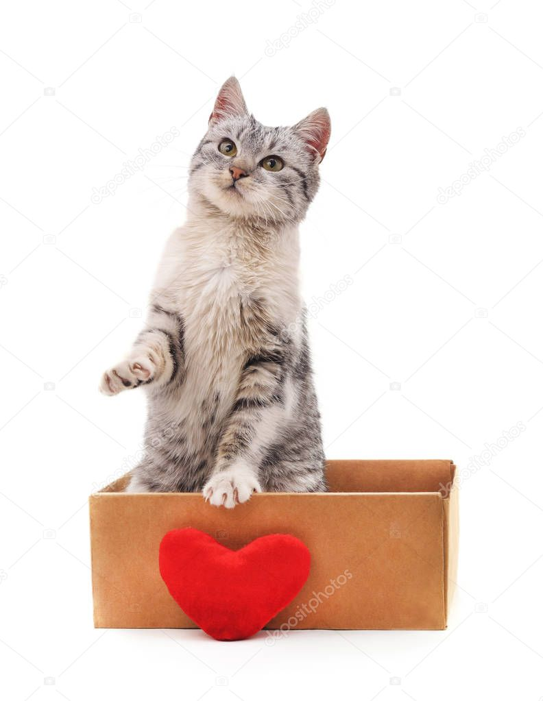 Kitten in a box with the heart isolated on a white background.