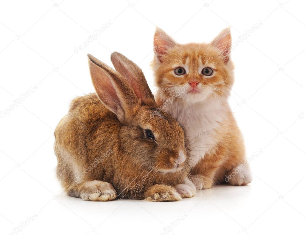 Red kitty and bunny on a white background.