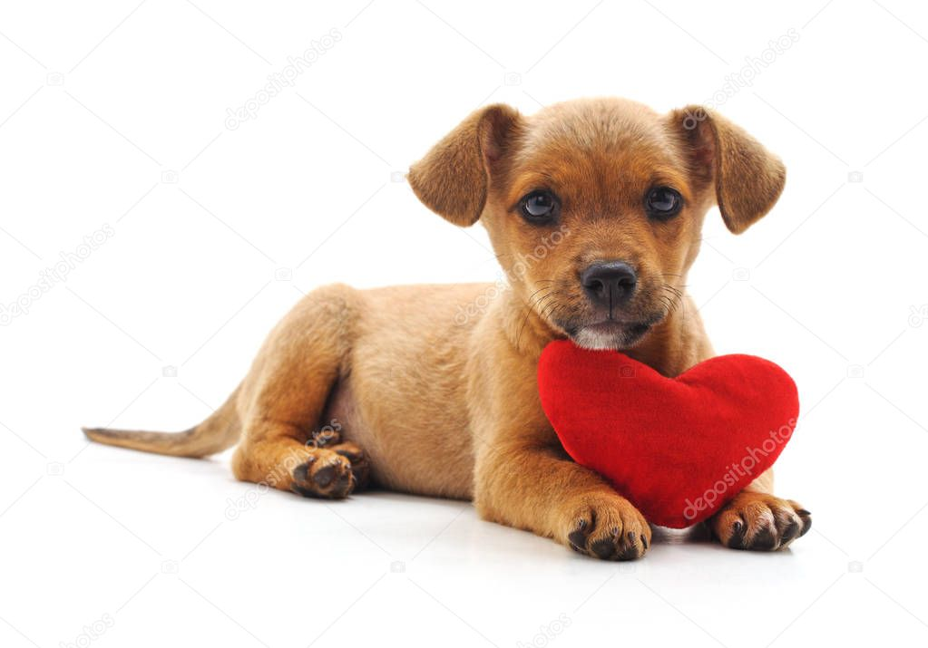Dog with heart isolated on a white background.