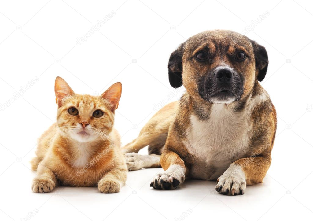 Cat and dog isolated on a white background.