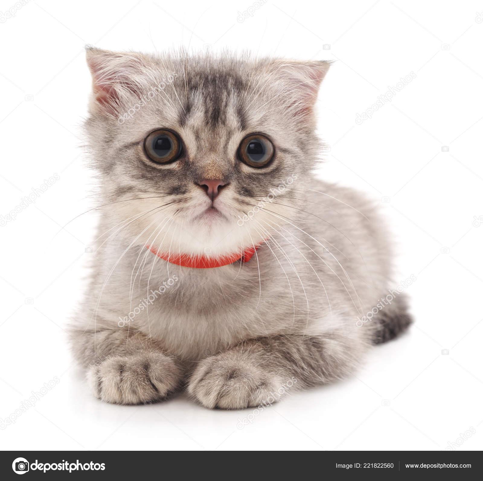 Beautiful Cute Cat Isolated White Background Stock Photo