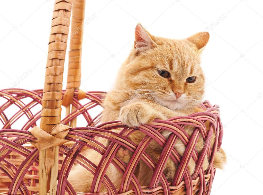 Cat in a basket isolated on a white background.