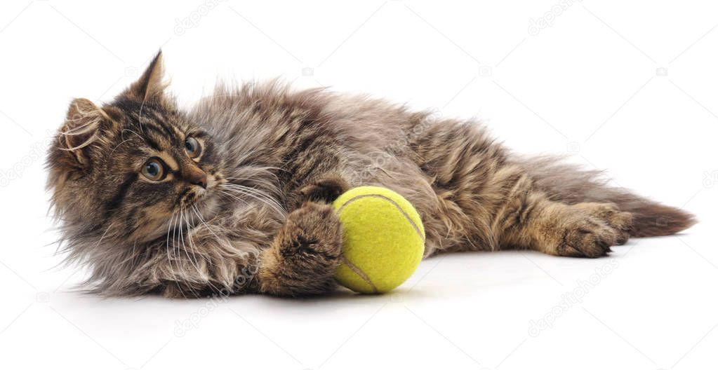 Cat and ball isolated on a white background