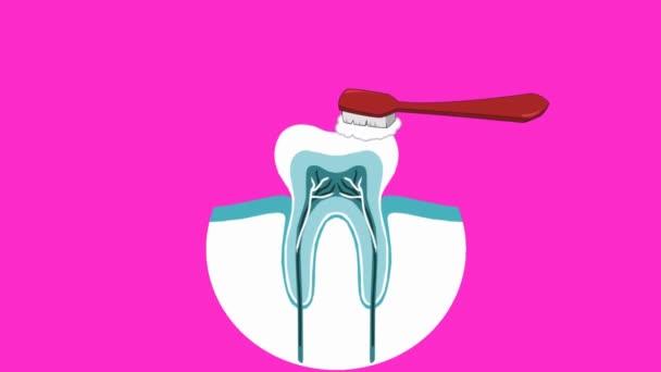 Dental Care - Vector Animation