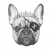 kézzel rajzolt ceruza illusztrációja a Francia Bulldog kalóz Félszemû izolált fehér