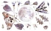 Akvarell misztikus gyűjtemény. Hold, lepkék, levelek és növények. Barna és lila