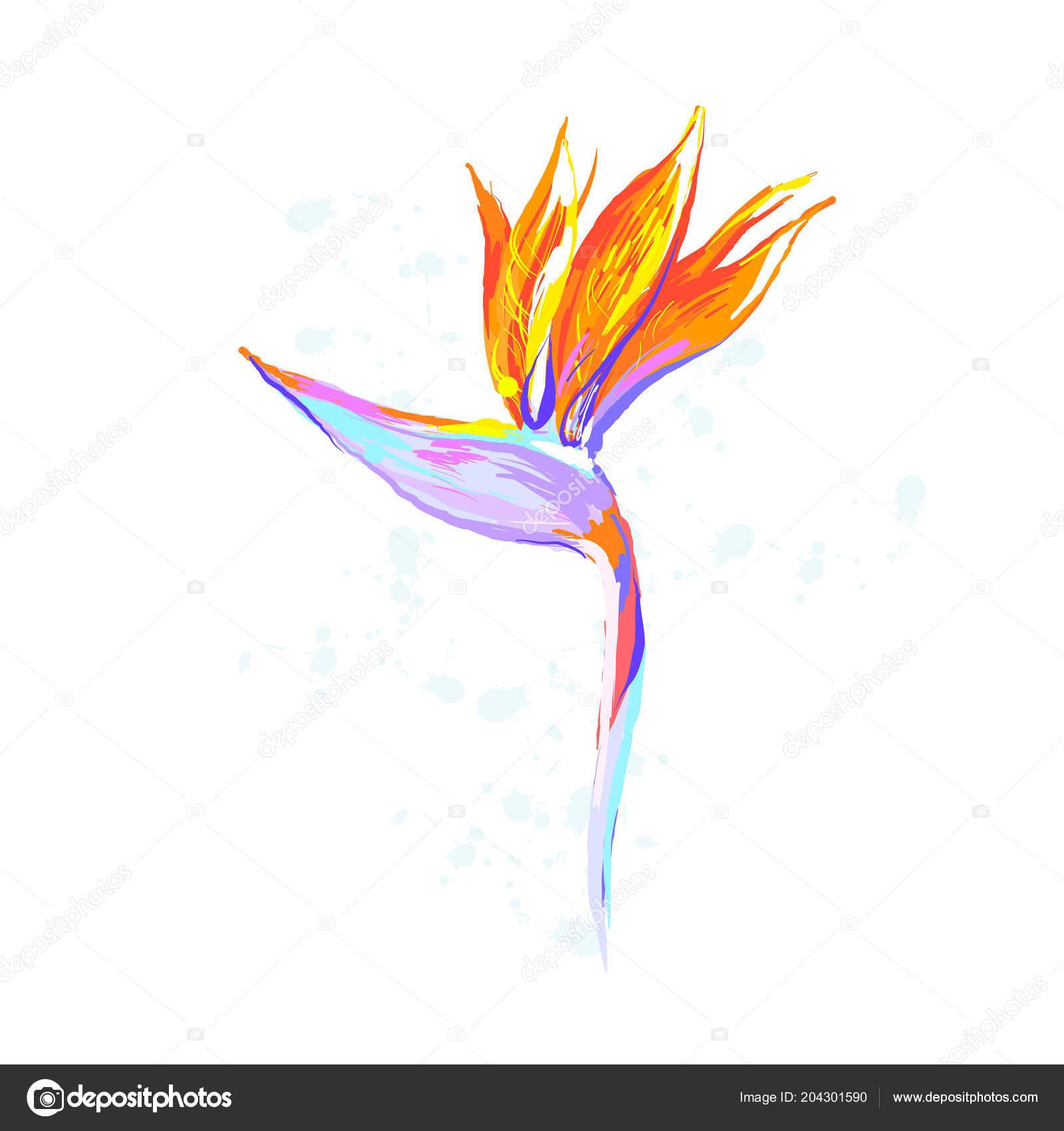 Strelitzia Reginae Flower Bird Of Paradise Crane Flower On White