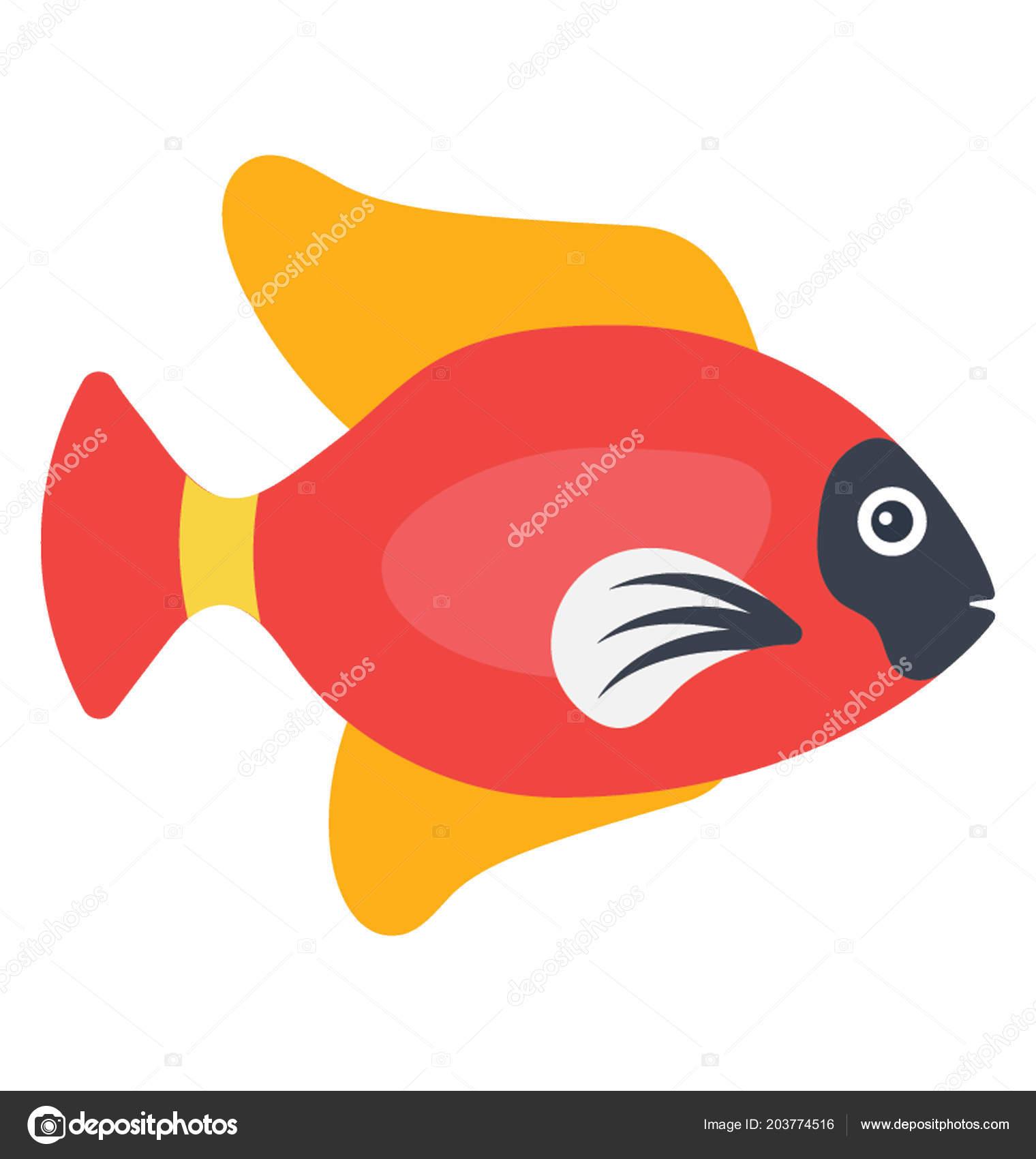 Red Colored Aquarium Pet Fish Orange Fins Characterizing Tropical ...