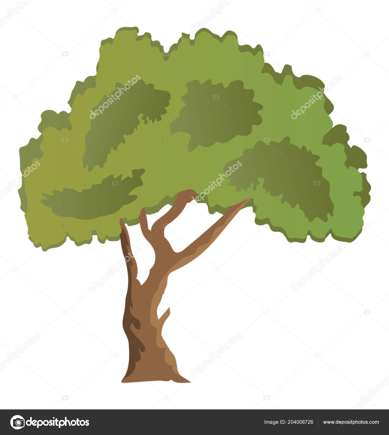 evergreen beautiful paperbark maple tree flat icon � stock