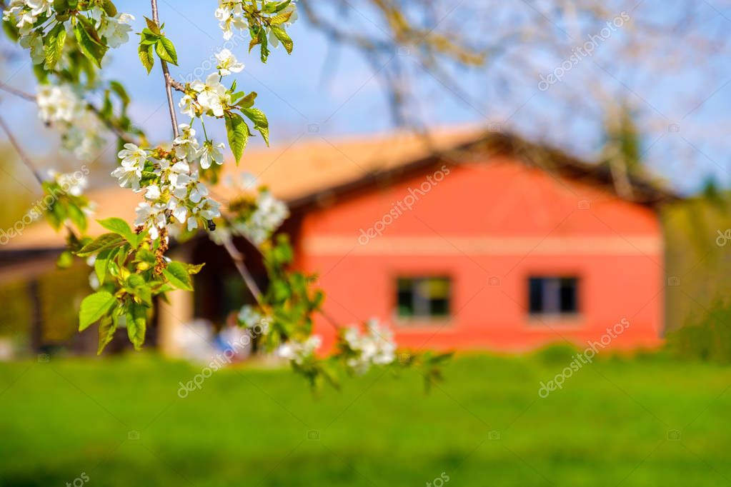 flower branch country house blur background springtime countryside .