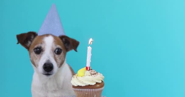 Niedlicher Hund mit Partyhut und Geburtstagstorte