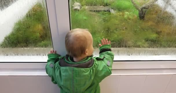 Baby is watching how plants and moss grow in a greenhouse