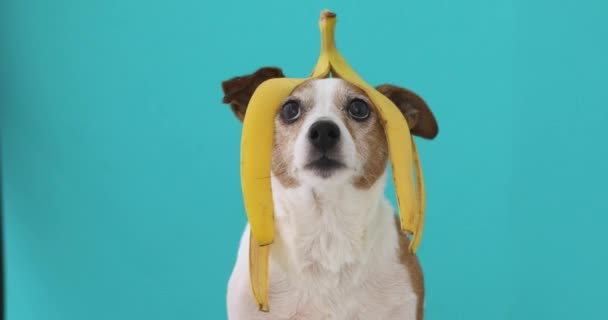 Funny dog with banana peel on his head portrait