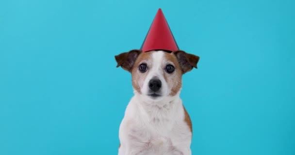 Aranyos kutya piros Party kalap tervezett