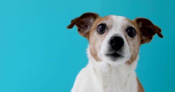 Dog head on blue background