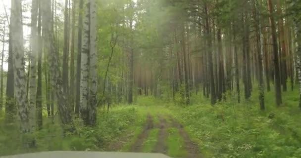 Les s vysokými stromy viděn ze čelního skla