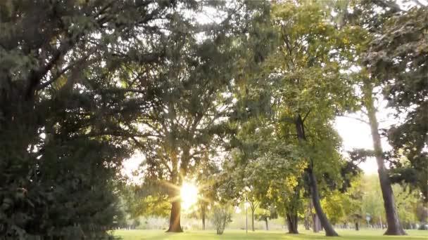 Ősz a parkban, a fák és a fű
