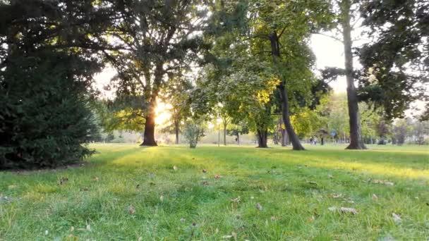Podzim v parku, stromy a trávy