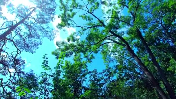 Green Forest, Trees in the Forest, Summer Landscape