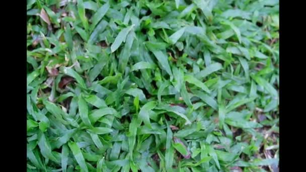 abstraktní pozadí zelené trávy
