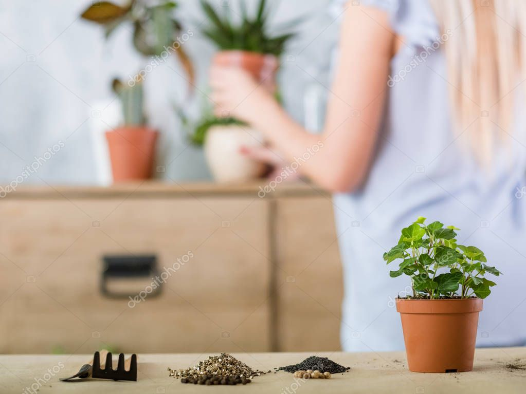 home gardening plant transplantation flowerpot