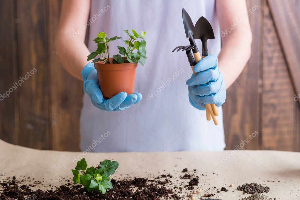 planting repotting service home plant shopping